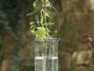"""Aliso 4"""" Hanging Tealight Lantern"""