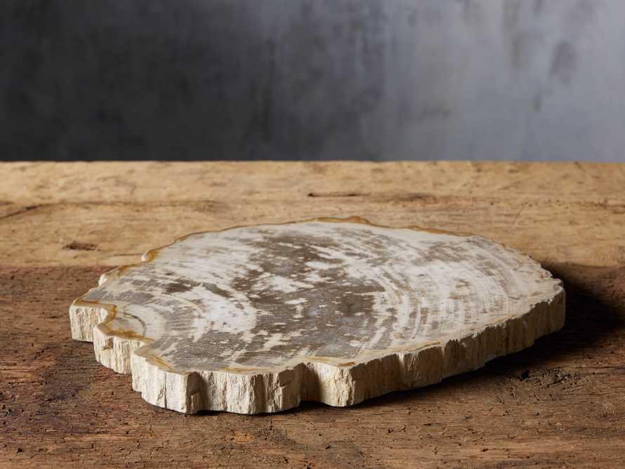 Petrified Wood Slab, slide 1 of 5