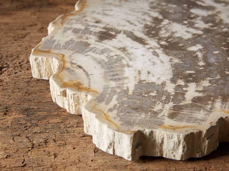 Petrified Wood Slab, slide 2 of 5
