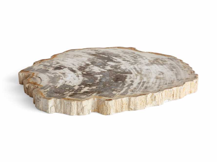 Petrified Wood Slab, slide 3 of 5