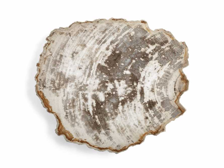 Petrified Wood Slab, slide 4 of 5