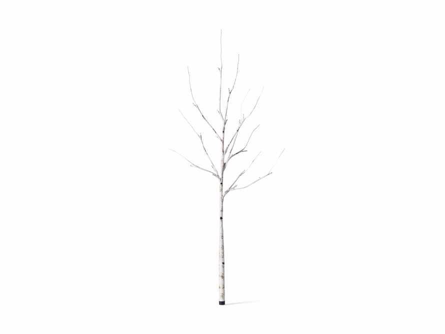 Aurora Birch Branch, slide 3 of 6