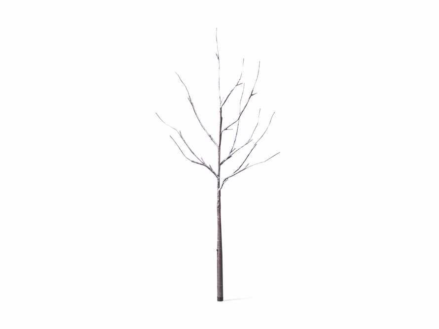 Aurora Snowy Branch, slide 3 of 7