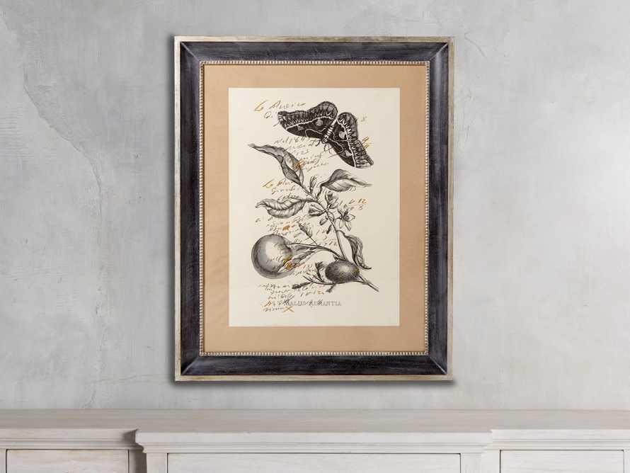 Malus Framed Print