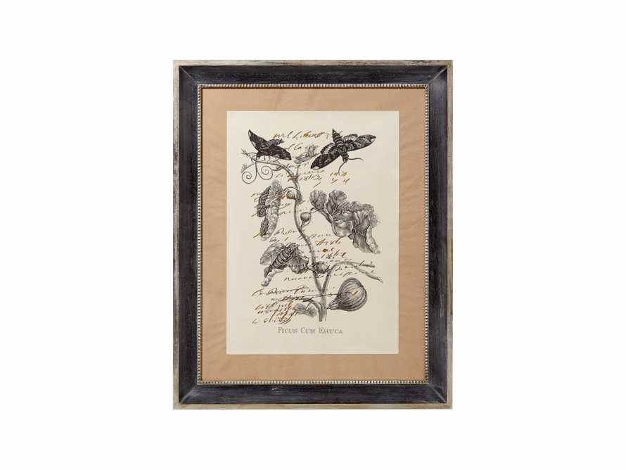 Ficus Framed Print