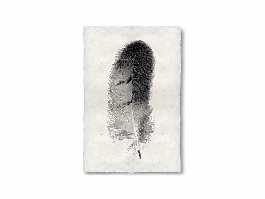 Feather Study Grand Print 7