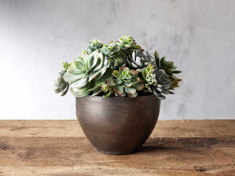Mix Succulent Large Bowl, slide 1 of 2