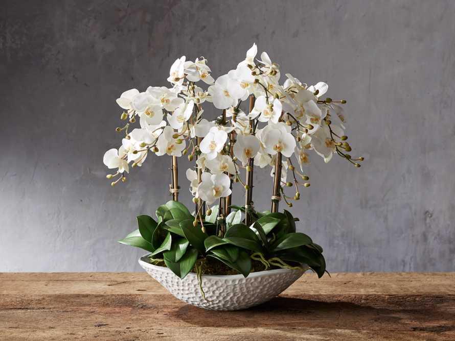 Yellow Oncidium Vase, slide 1 of 1
