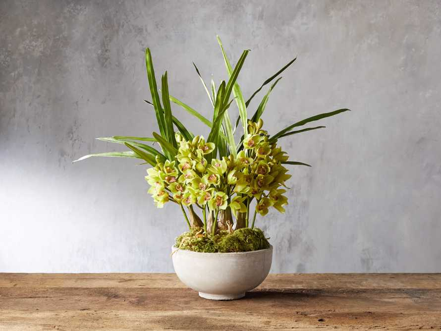 Green Cymbidium Orchid, slide 1 of 1