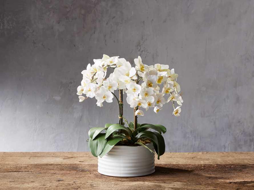Phalaenopsis White Planter, slide 1 of 1