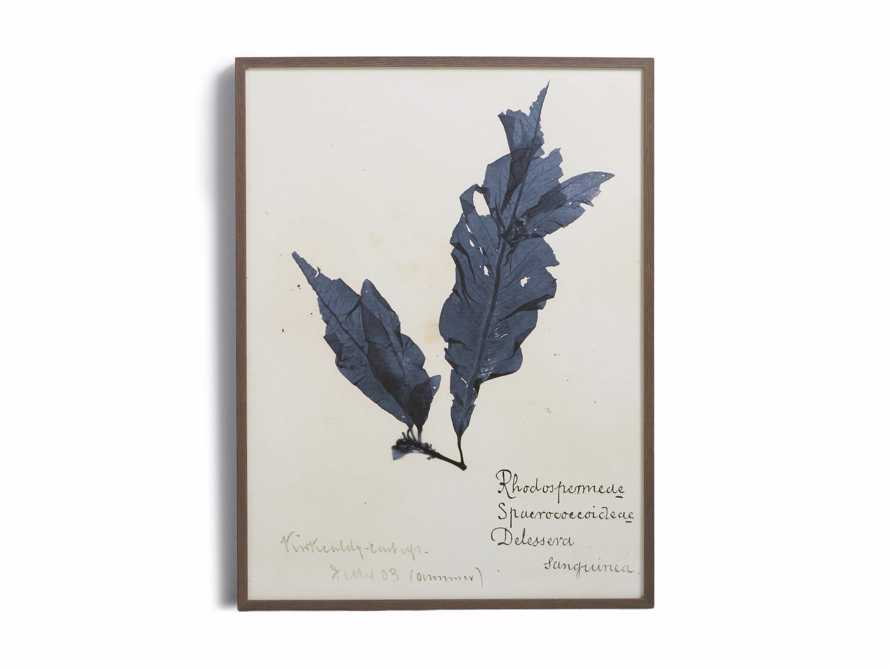 "32"" Blue Seaweed Framed Print II, slide 5 of 5"