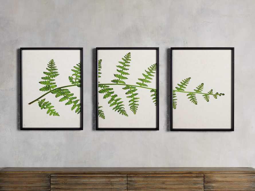 Fern Triptych Print, slide 1 of 4
