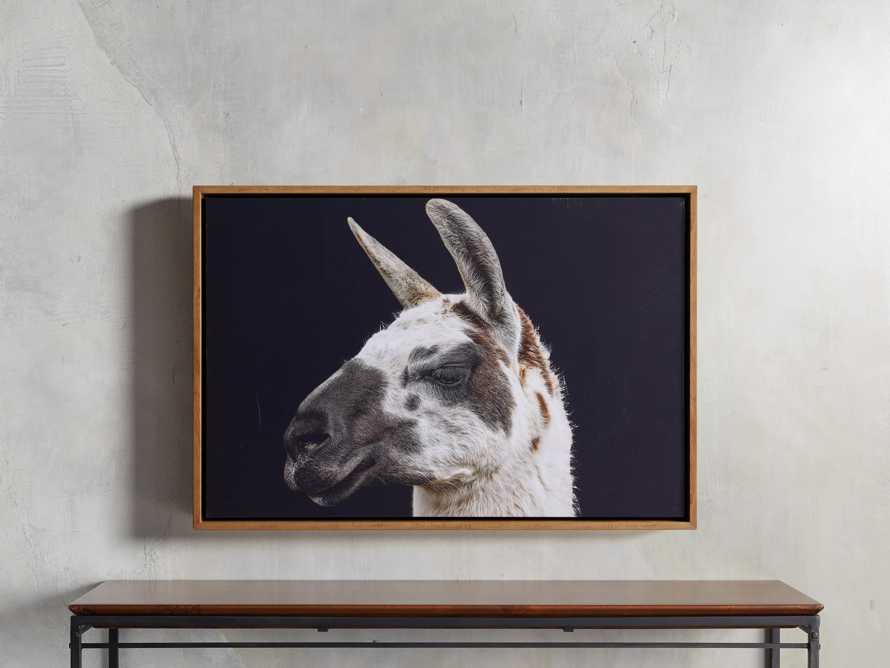 Guanaco Framed Print, slide 1 of 3