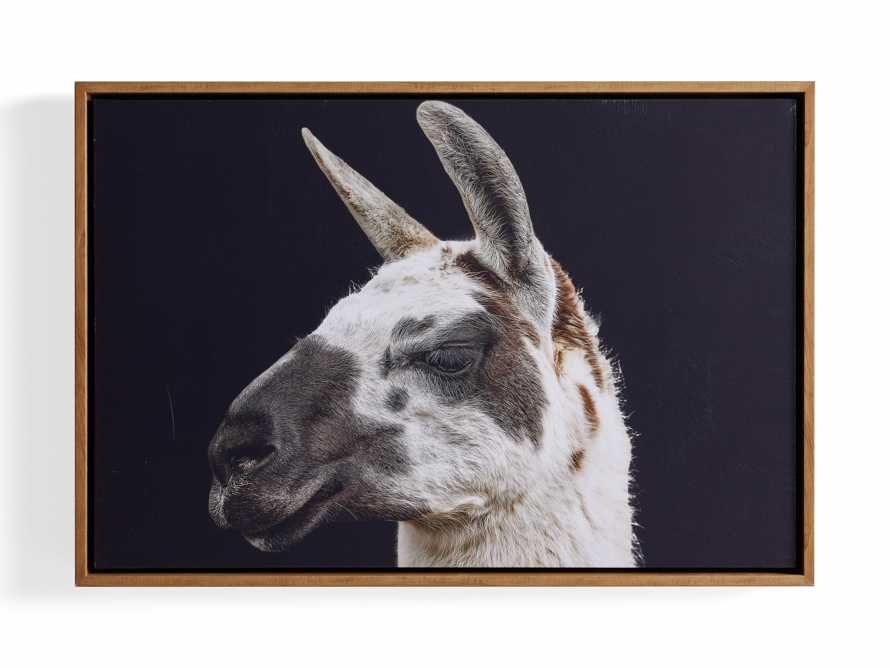 Guanaco Framed Print, slide 3 of 3